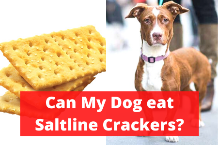 Can My Dog saltline crackers