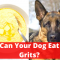 Can your dog eat Grits? | Read This Before you Feed