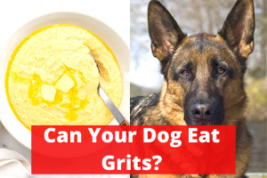 Can Your Dog Eat Grits