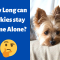 Can you Leave your Yorkie alone at Home?