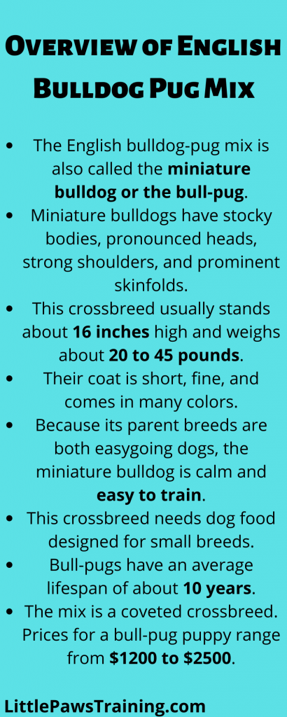 Overview of English Bulldog Pug Mix