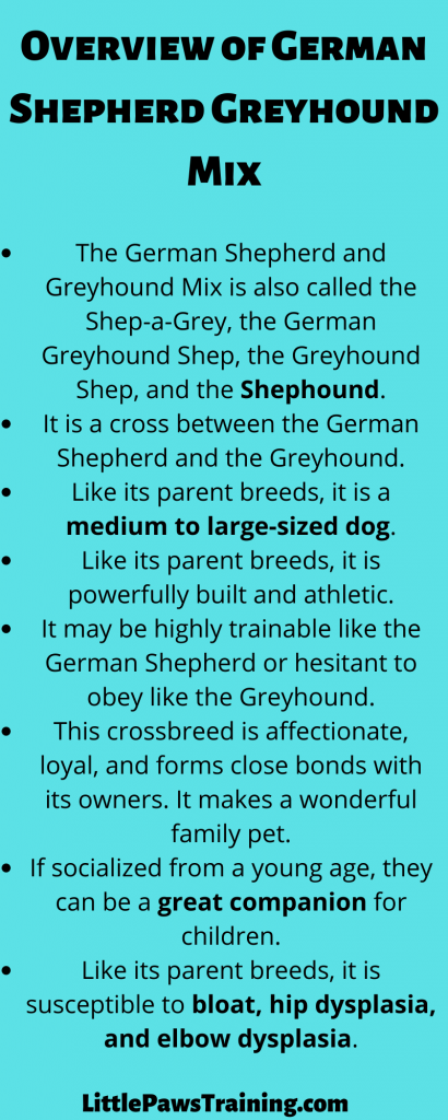 Overview of german shepherd greyhound mix