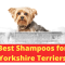 7 Best Dog Shampoos for your Yorkshire Terrier in 2020 [Chosen by Professional Trainer]