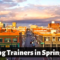 The 8 Best Dog Trainers in Springfield, Missouri