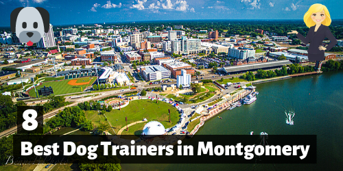 8 Best Dog Trainers in montgomery, alabama