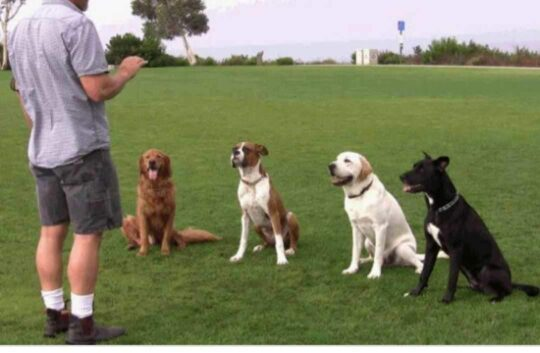 best dog trainers in little rock arkansas