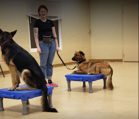 on the spot dog training springfield mo