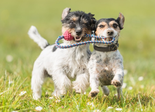 7 Tips to Socialize your dog with other dogs and humans
