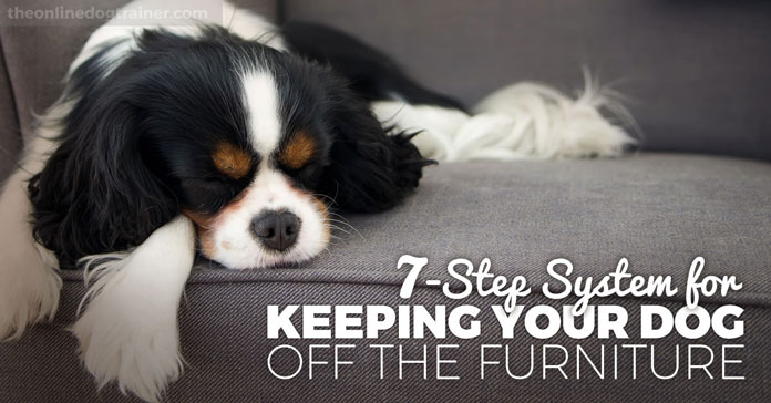 Doggy Dan's 7-Step System for Keeping Your Dog Off the Furniture