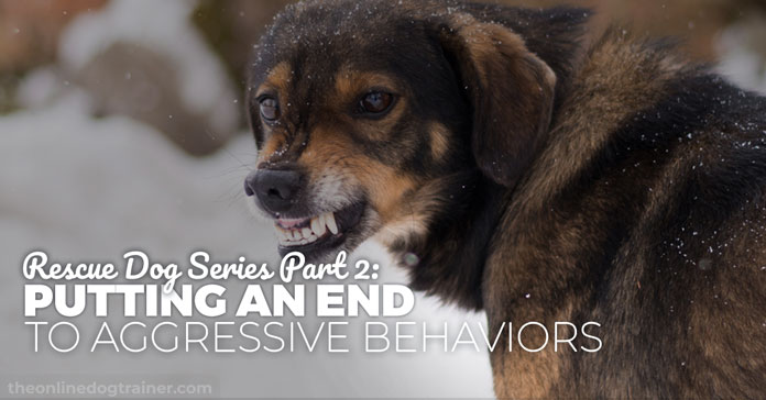 Rescue Dog Series Part 2: Putting an End to Aggressive Behaviors