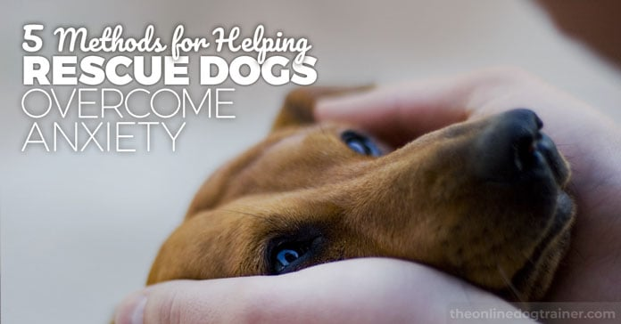 5 Methods for Helping Your Rescue Dog Overcome Anxiety