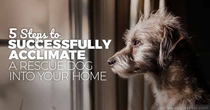 5 Steps to Successfully Acclimate A Rescue Dog Into Your Home