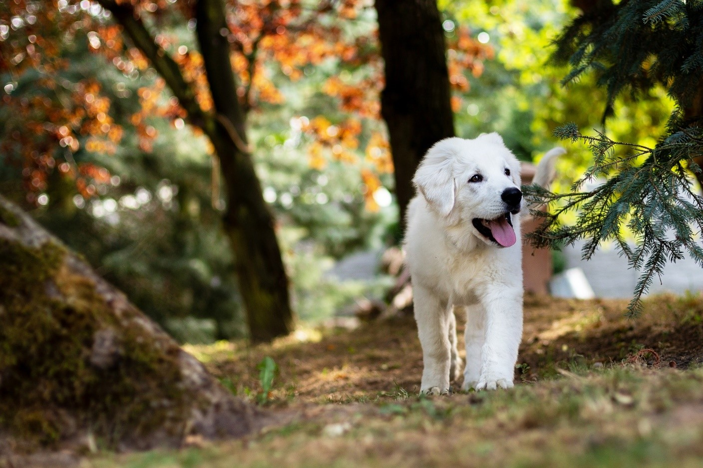 5 Dog Myths that Most Dog Owners Fall For