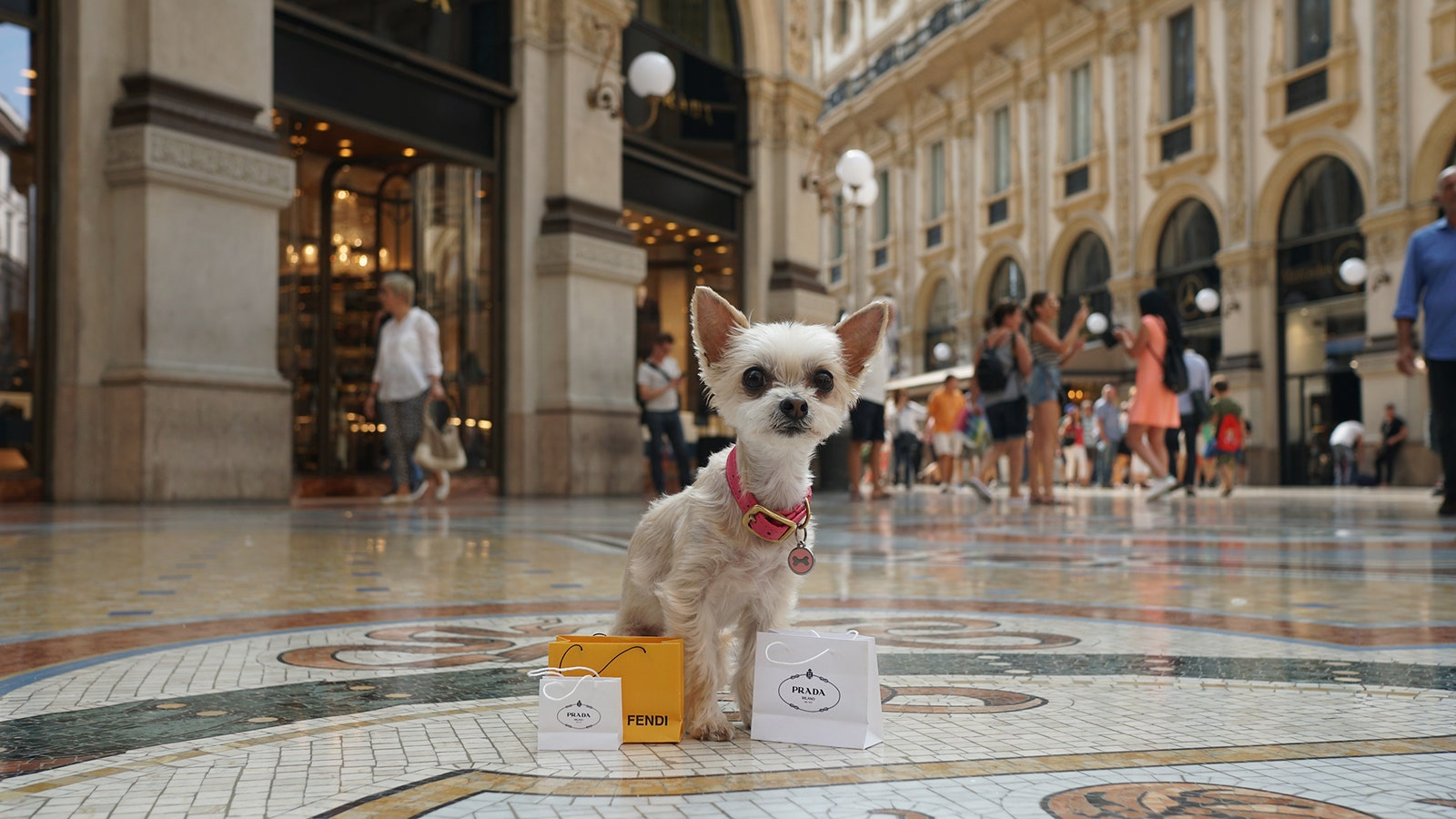 How Well do Pet Hotels Take Care of Your Dog?
