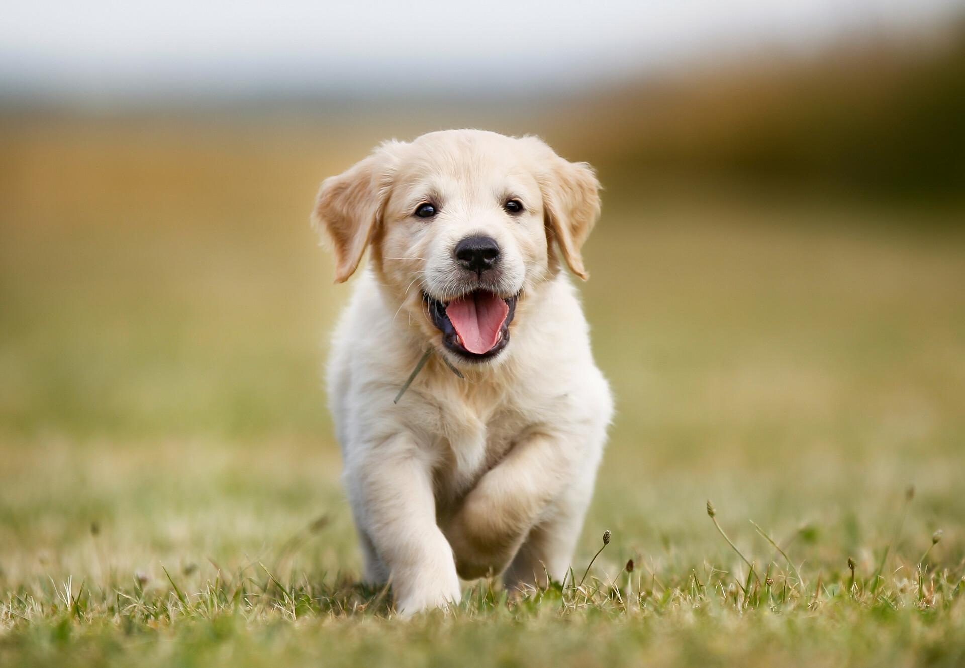 Thinking Of Getting A Puppy? Here Are Some Basics To Learn First